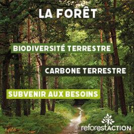 Signals partenaire de Reforest'Action