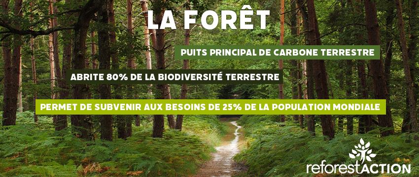 Signals partenaire du programme de Reforest'Action